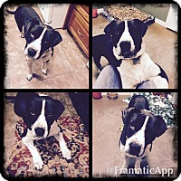 Adopt A Pet :: Sampson - Savannah, GA