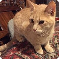 Adopt A Pet :: Dusty - Morganton, NC
