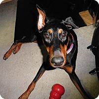 Adopt A Pet :: Ada - Buffalo, MN