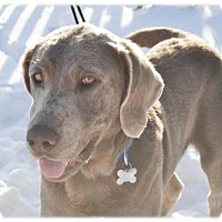 Adopt A Pet :: Odessa - Broomfield, CO