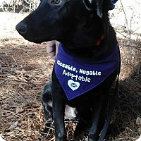 Adopt A Pet :: Deally - Little Rock, AR