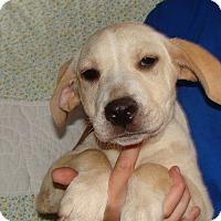 Adopt A Pet :: Lovebug - Oviedo, FL