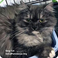 Adopt A Pet :: Sissy - Irvine, CA