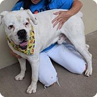 Adopt A Pet :: Tristen - McKinney, TX