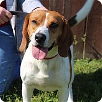 Adopt A Pet :: Bob - Elyria, OH