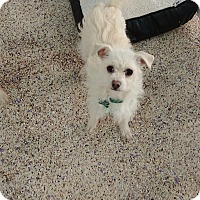 Adopt A Pet :: Dede - Thousand Oaks, CA