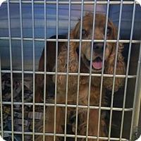 Adopt A Pet :: s/c Jessie - Miami, FL