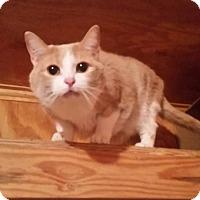 Adopt A Pet :: Luke - Monterey, VA