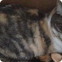 Adopt A Pet :: Sedona - St. Louis, MO