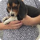 Adopt A Pet :: Gordon