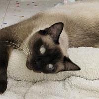 Adopt A Pet :: Katrina - Encinitas, CA