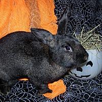 Adopt A Pet :: Thistles - Alexandria, VA