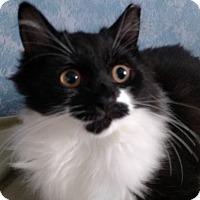 Adopt A Pet :: Clark Gable - Stafford, VA
