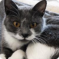 Adopt A Pet :: Willow - Joplin, MO