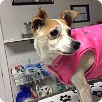 Adopt A Pet :: Joseph - St. Louis, MO