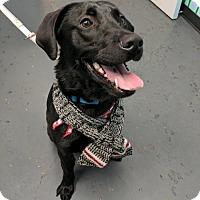 Adopt A Pet :: Skipper - Richmond, BC