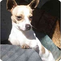 Adopt A Pet :: Dutchess - Templeton, CA