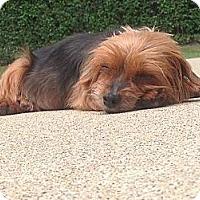 Adopt A Pet :: Fiona - Carmine, TX