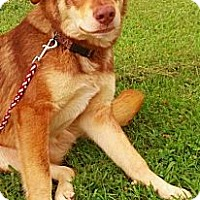 Adopt A Pet :: Wile E - Lewisville, IN