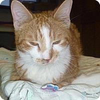 Adopt A Pet :: Riley - Hamburg, NY