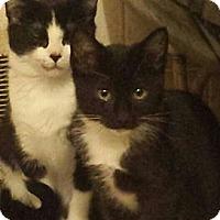 Adopt A Pet :: Nutmeg and Donnie - Bear, DE