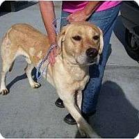 Adopt A Pet :: CONRAD - La Mesa, CA