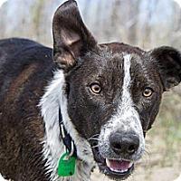 Adopt A Pet :: Zac - Saskatoon, SK