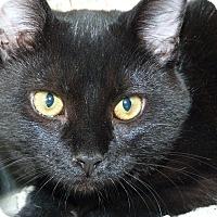 Adopt A Pet :: Annie - Stafford, VA