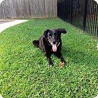 Adopt A Pet :: Gus - Wilmington, DE