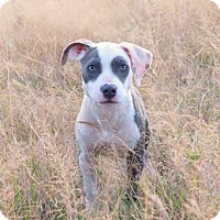 Adopt A Pet :: ZENA - Kingston, WA