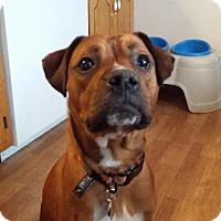 Adopt A Pet :: Frazier - Plainfield, IL