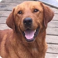 Adopt A Pet :: Nick - New Canaan, CT
