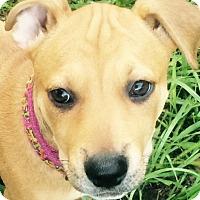 Adopt A Pet :: Calypso#10F - Orlando, FL
