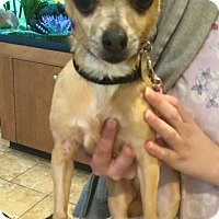 Adopt A Pet :: Honey - Oak Ridge, NJ