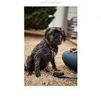 Adopt A Pet :: Tasha - Edmond, OK