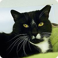 Adopt A Pet :: Fefil - Colorado Springs, CO