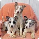 Adopt A Pet :: ALEXIS~ADELE~ANICIA