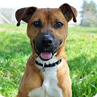 Adopt A Pet :: Sprout - Delaware, OH