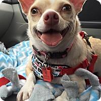 Adopt A Pet :: Elsa - Troy, MI