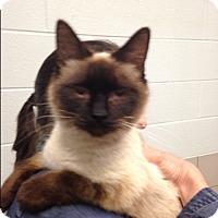 Adopt A Pet :: Jasmine - Nashville, TN