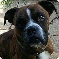 Adopt A Pet :: REGGIE COMING ATTRACTION - Rowayton, CT