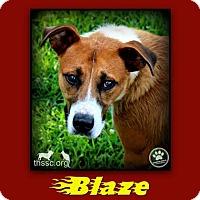 Shepherd (Unknown Type) Mix Dog for adoption in Sullivan, Indiana - Blaze