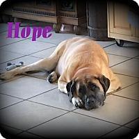 Adopt A Pet :: Hope - Denver, NC