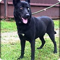 Adopt A Pet :: Mya - Demopolis, AL