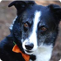 Adopt A Pet :: Mookie - McKenna, WA