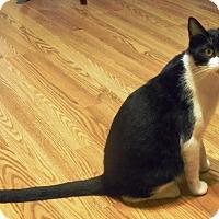 Adopt A Pet :: Ranger - Parkton, NC