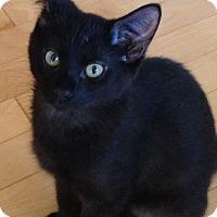 Adopt A Pet :: Levi-5 MONTHS-$125 - Naperville, IL