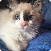 Adopt A Pet :: Rigby - Cerritos, CA