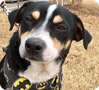 Beagle Mix Dog for adoption in Pulaski, Tennessee - Ricky