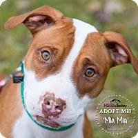 Adopt A Pet :: Mia Mia - Green Bay, WI